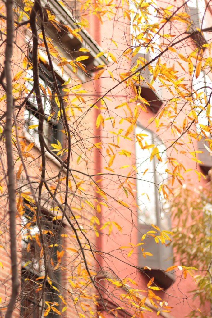 Fall in the West Village, NYC