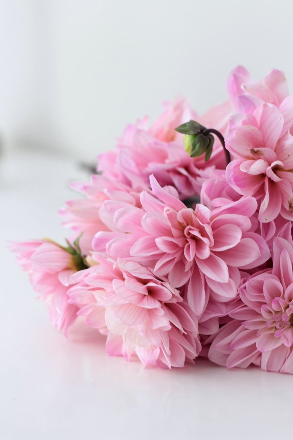 Pink dahlias I Adorned With Love