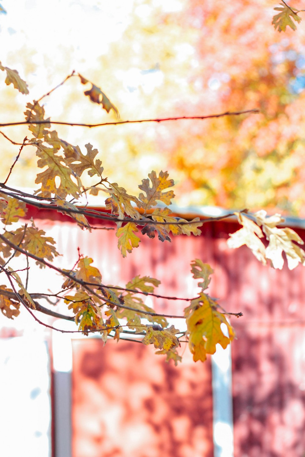 Guide to apple picking in Oak Glen, CA - Adorned With Love