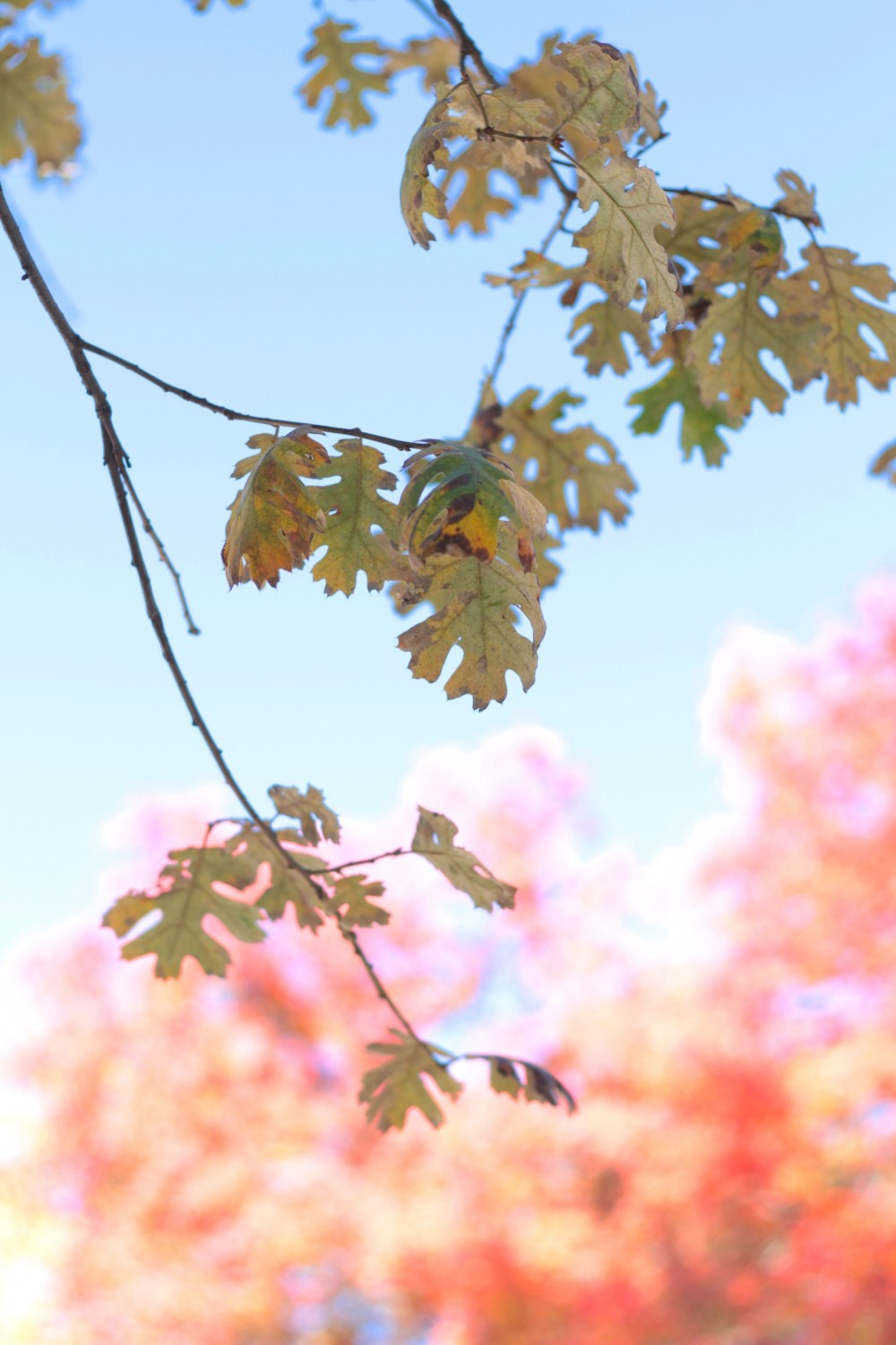 Fall foliage | Adorned With Love
