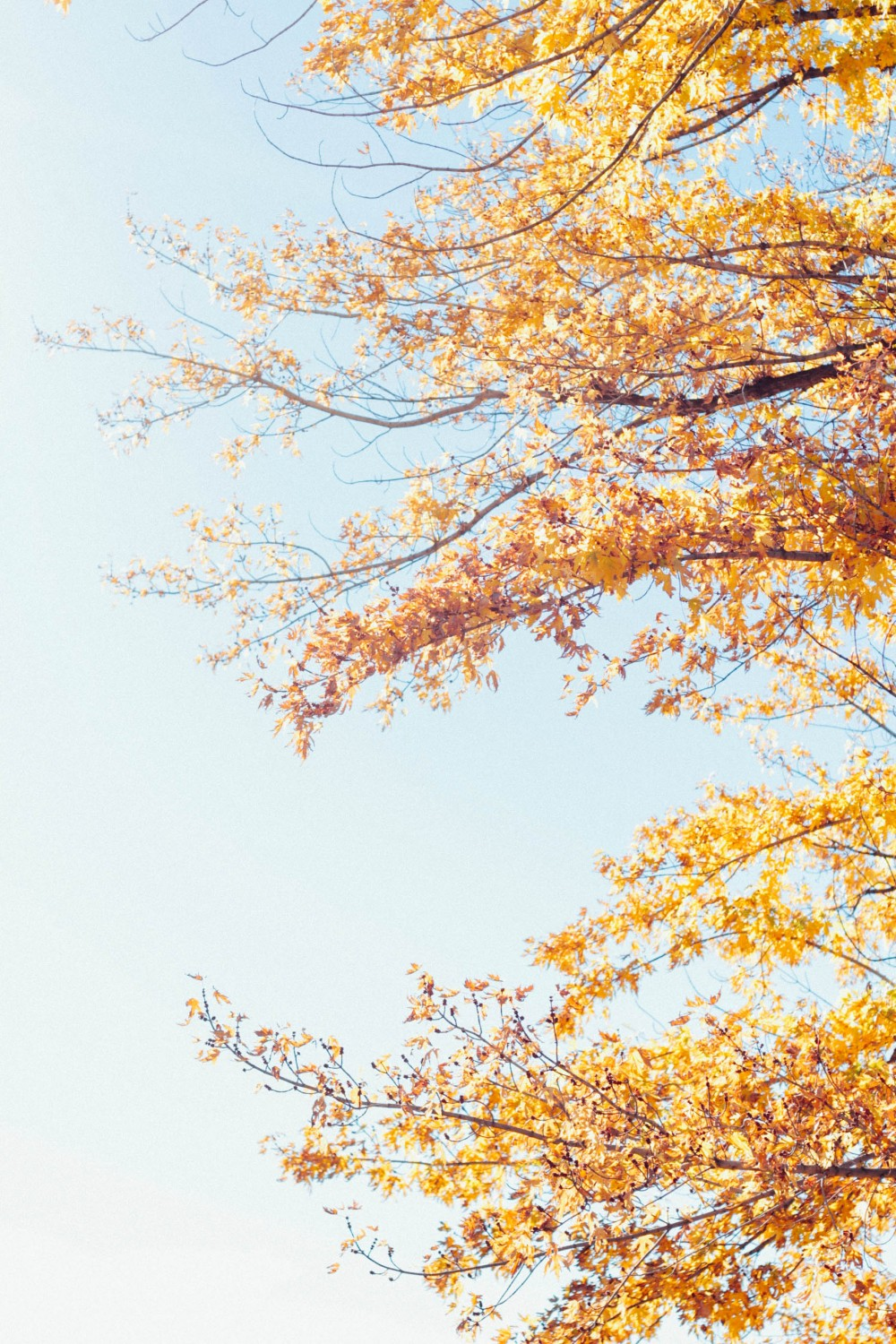 Fall foilage at Willowbrook Farm | Adorned With Love