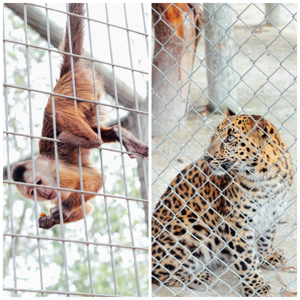 Zoological Wildlife Foundation   Adorned With Love