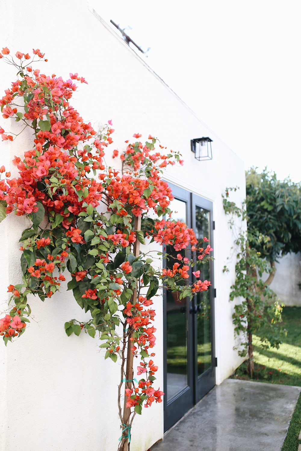Bougainvillea | Adorned With Love